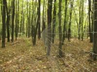 Бежецкие «рыболовы и охотники» присвоили лес