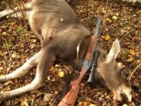 В Весьегонском районе браконьер застрелил трех лосей