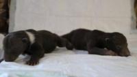 Андреапольские медвежата в надежных руках