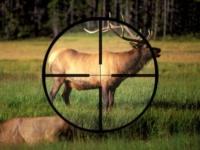 При задержании браконьеров пострадал сотрудник полиции