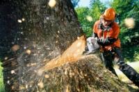 Вальщика леса придавило деревом в Осташковском районе