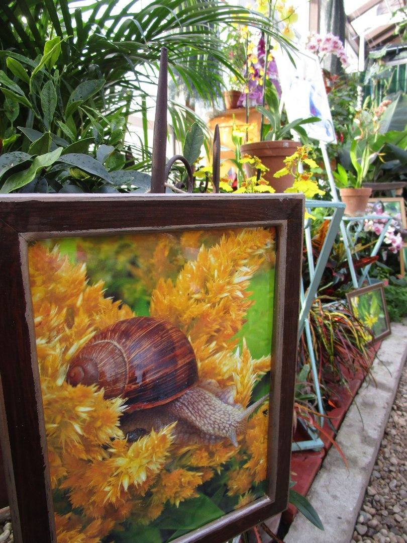 «Жизнь на цветах» в Ботаническом саду